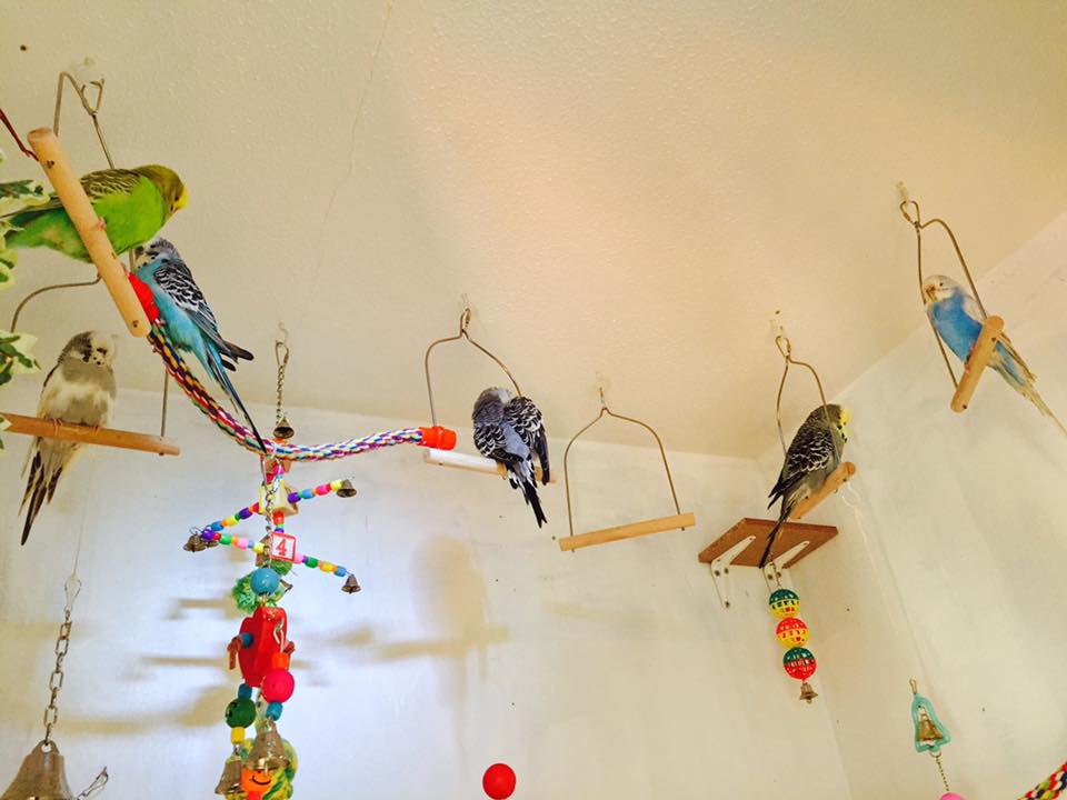 Jen Jane S Beautiful Budgie Aviary Diy Parakeet Home I